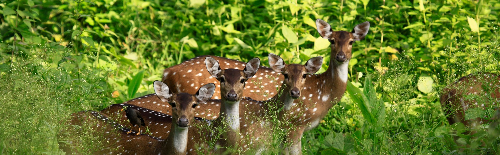 Wayanad Muthanga Forest Deers