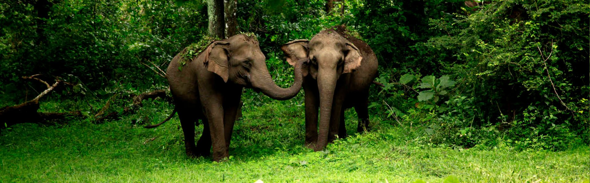 Wayanad Elephants